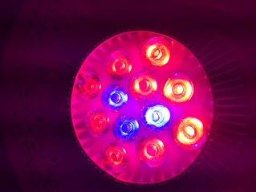 Oxyled GL02 Hydroponic LED Indoor Plant Grow Lights, 24W, 12 LEDs, 3 Blue/9 Red with Temperature Control, Energy Efficient